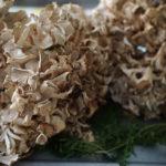 Салатка з гриба бараняча голова